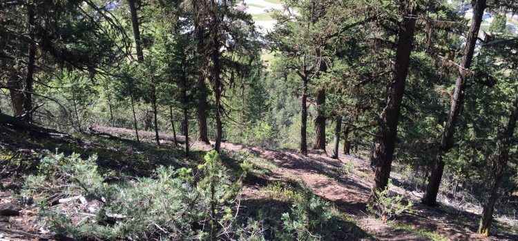 Youth Wilderness Basics (Ages 8-14)