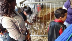 Animal Farm Tour
